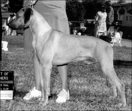 Rhodesian Ridgeback Ch Calico Ridge Secret Agent